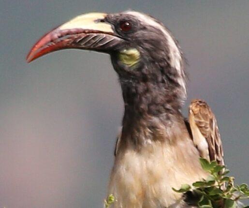 Birdwatching Kenya