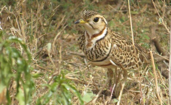 Bird photography Kenya