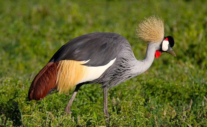 Nairobi National Park Birding