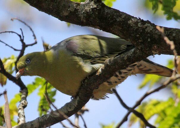 Mau Eburu Birds