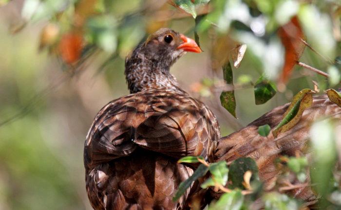 Gatamaiyu Forest Day Birdwatching