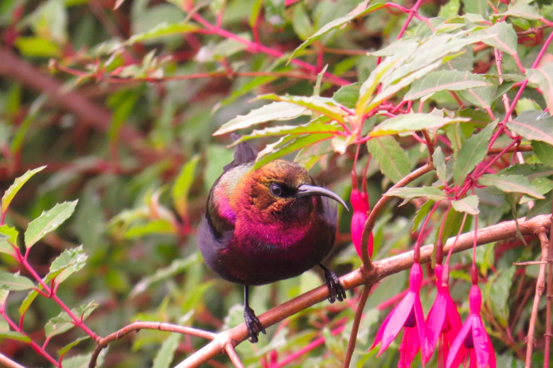 Birdwatching in Kenya