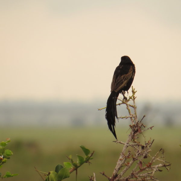 Birdwatching Safaris Kenya