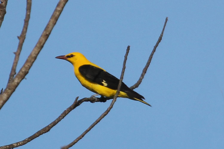Birding safaris Kenya