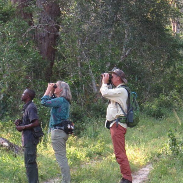 Arabuko Sokoke Forest birdwatching