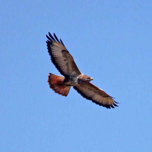 Birdwatching Aberdare Park