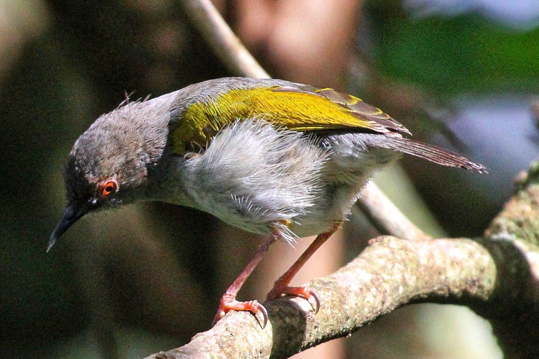 Taita Hills Birding