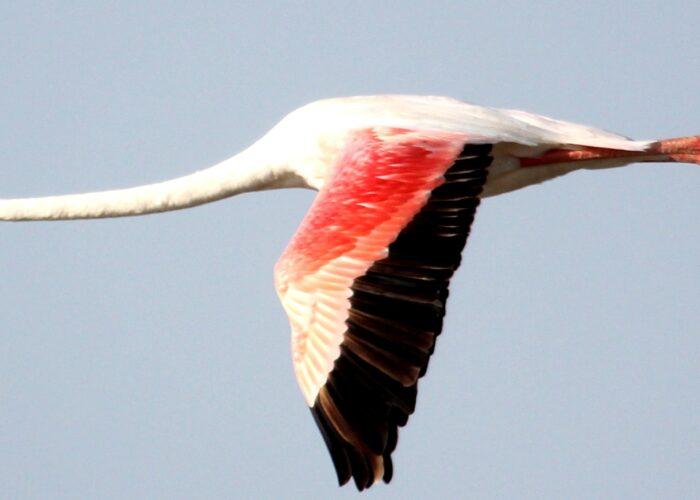 birdwatching lake bogoria