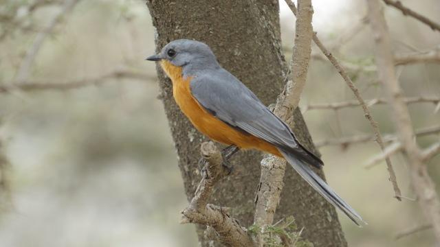 Birdwatching Tsavo East
