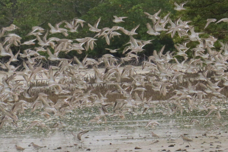 Mida Creek Birdwatching